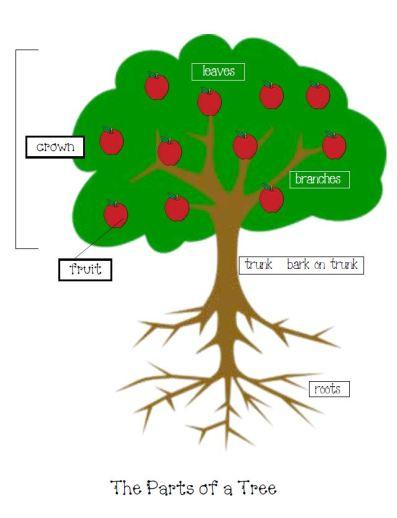Tree Parts